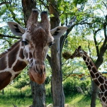 Indianapolis Zoo 052_Edit_sym