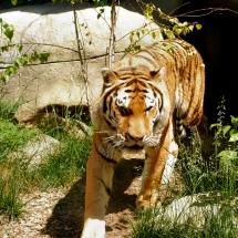 Indianapolis Zoo 457_edit_sym
