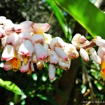 Rainforest flora